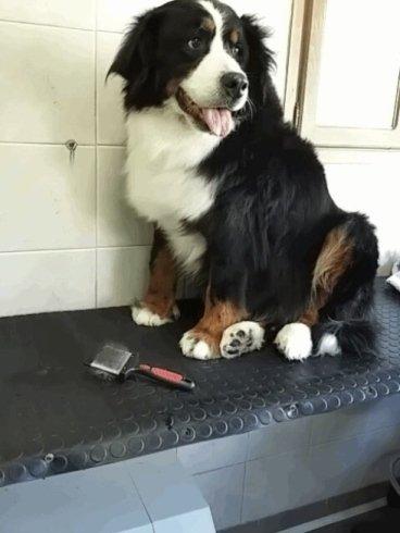 un cane nero bianco e marrone