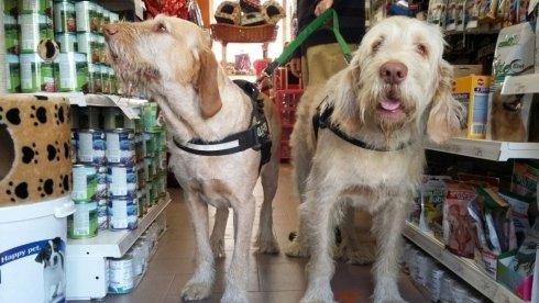 due cani con delle pettorine in un negozio