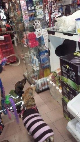 due cani in un negozio