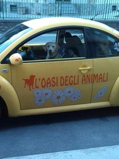 una macchina gialla con dentro dei cani