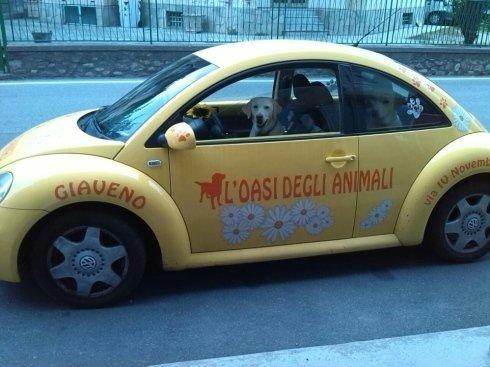 una macchina gialla con scritto l'oasi degli animali