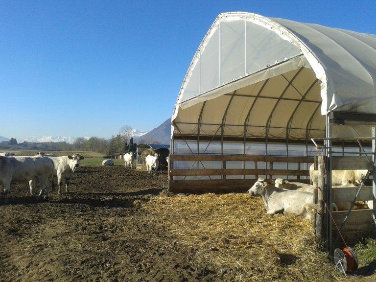 Produzione serre cuneo novarino lorena for Serre agricole usate in vendita