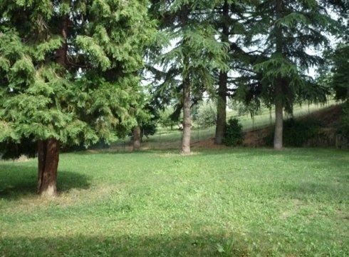ampio giardino con alberi sempreverdi