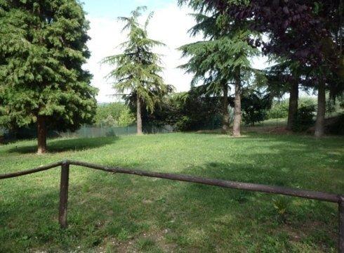 giardino con pini
