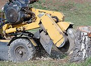 Professional using the machine for clearing the tree stump