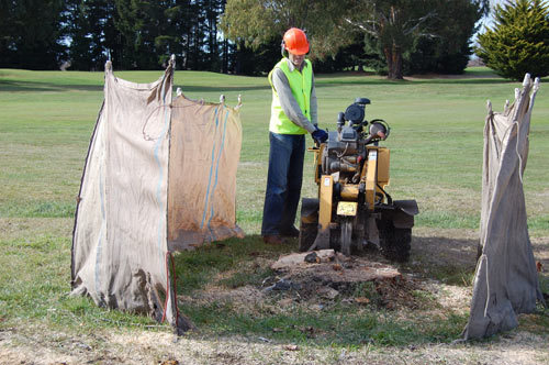 Expert clearing stump by using grinding machine