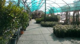 piante da giardino, piante da frutto, piante