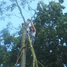 Crown lifting - High Wycombe, Buckingham - A J Howarth Tree Surgeon - Tree surgeon