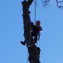 Thinning and reduction - Hemel Hempstead, Hertfordshire - A J Howarth Tree Surgeon - Tree surgeon