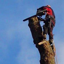 Sectional felling - Aylesbury, Buckinghamshire - A J Howarth Tree Surgeon - Tree surgeon