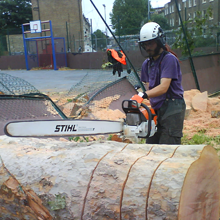 Thinning and reduction - Hemel Hempstead, Hertfordshire - A J Howarth Tree Surgeon
