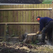 Stump removal - High Wycombe, Buckingham - A J Howarth Tree Surgeon - Tree cutting