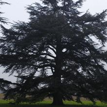 Thinning and reduction - Hemel Hempstead, Hertfordshire - A J Howarth Tree Surgeon - Tree