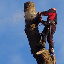 Hedge trimming - Hemel Hempstead, Hertfordshire - A J Howarth Tree Surgeon - Tree edge cutting