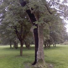 Hedge trimming - High Wycombe, Buckingham - A J Howarth Tree Surgeon - Trees
