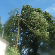 Emergency tree surgery - Hemel Hempstead, Hertfordshire - A J Howarth Tree Surgeon - Tree felling