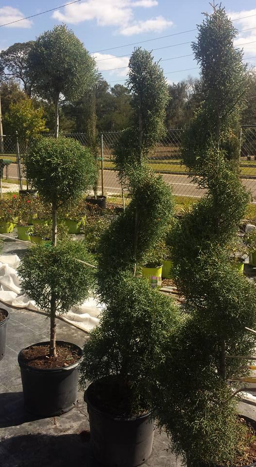 Garden Plants Gainesville, FL