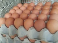 annie's free range fresh eggs on tray