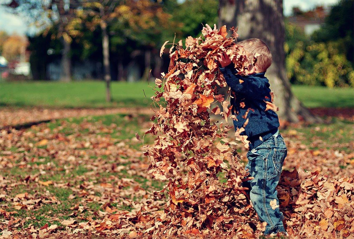 Stouts Landscape & Lawn Service, Leaf Pickup
