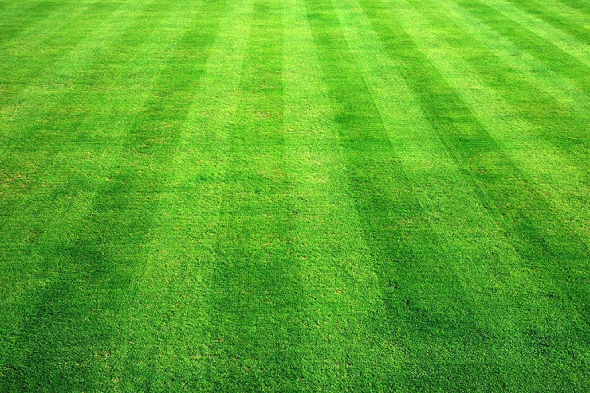 Stouts Lawn Care