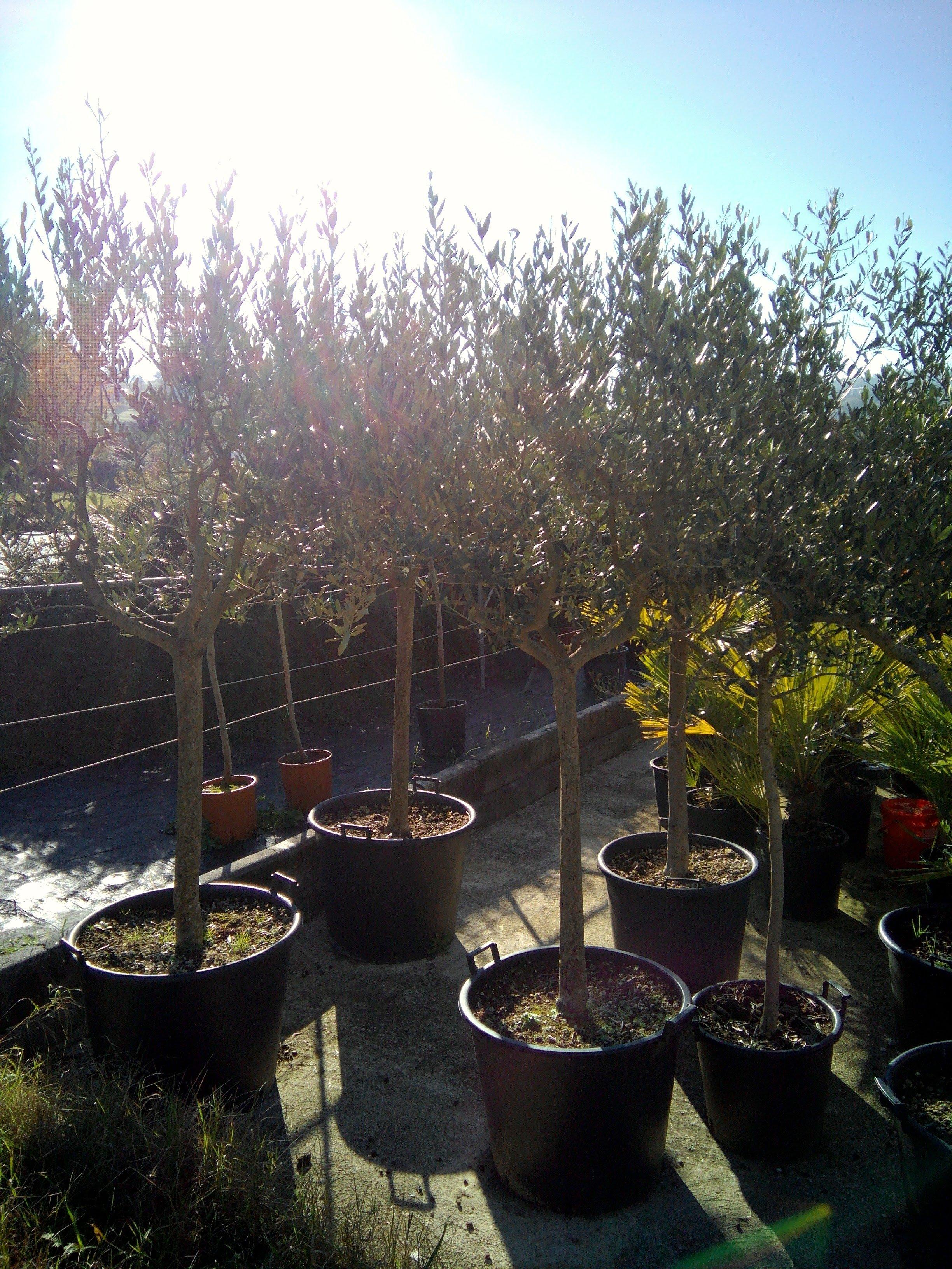piante da orto all'aperto
