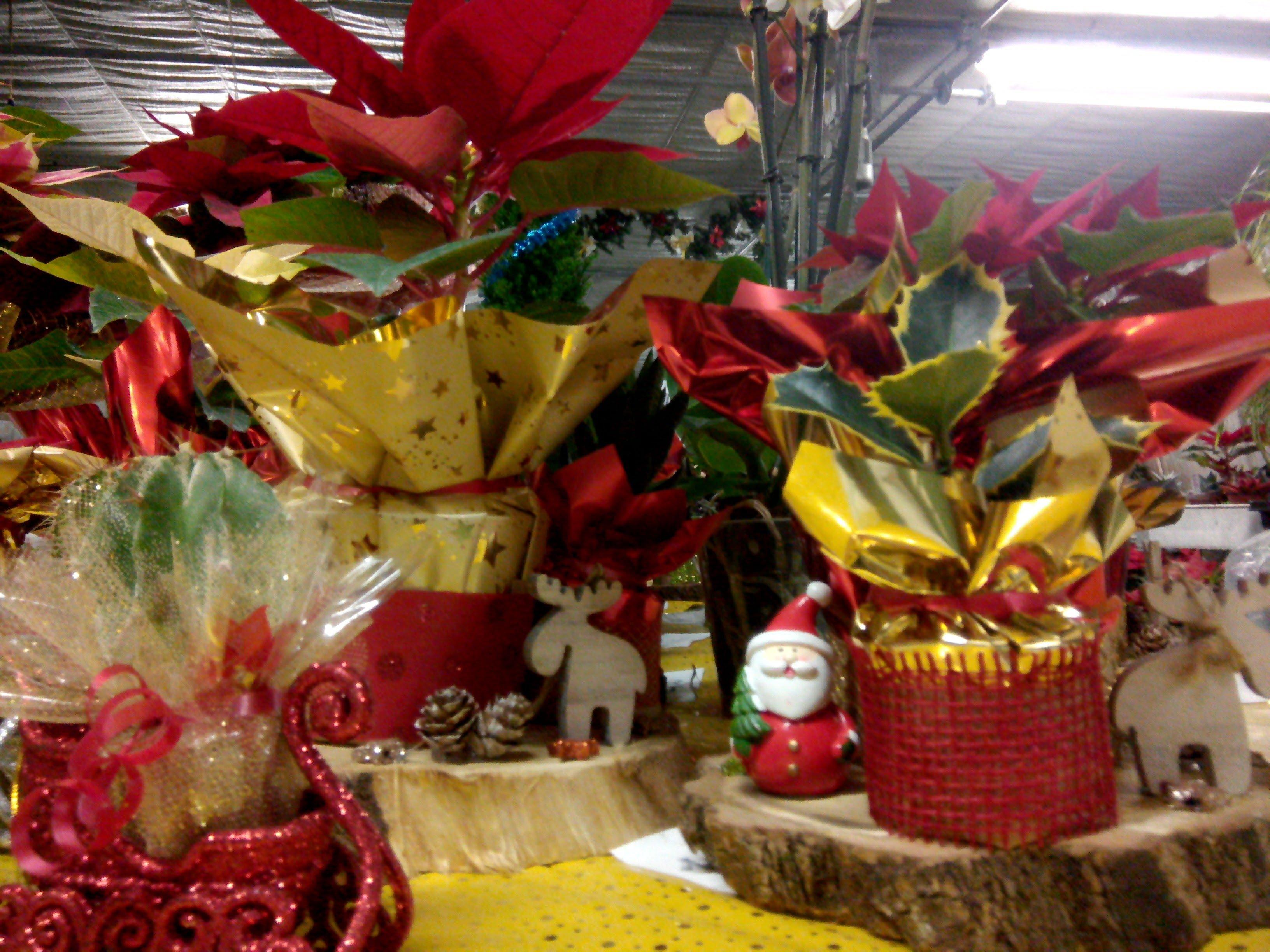fiori e articoli da regalo