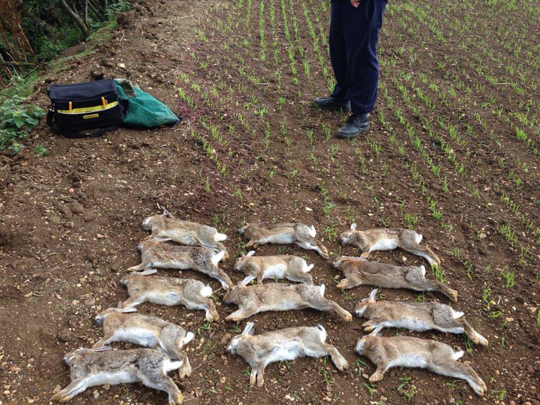 ferreting to control the rabbit population