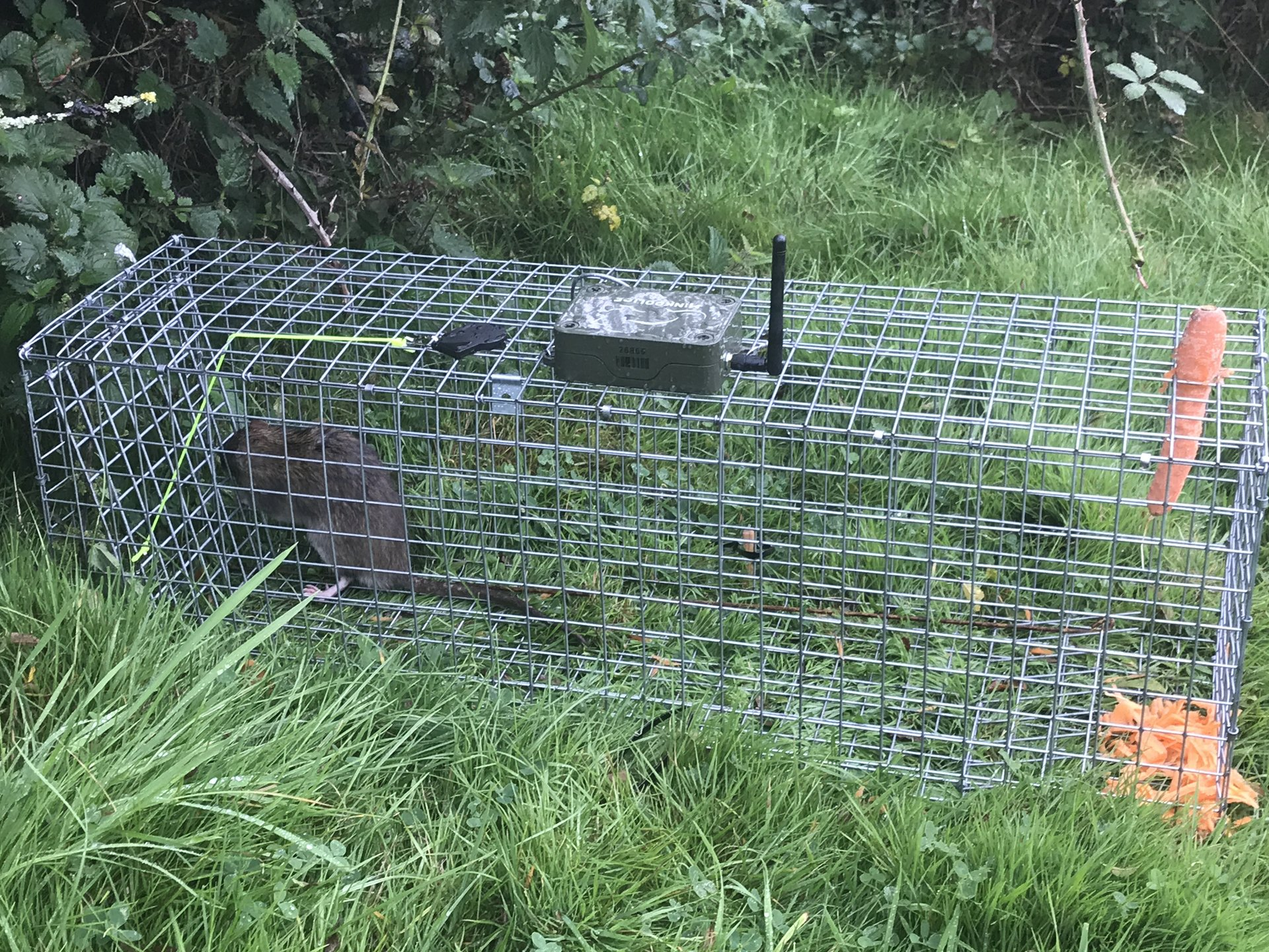 Rat Monitoring System on a trap