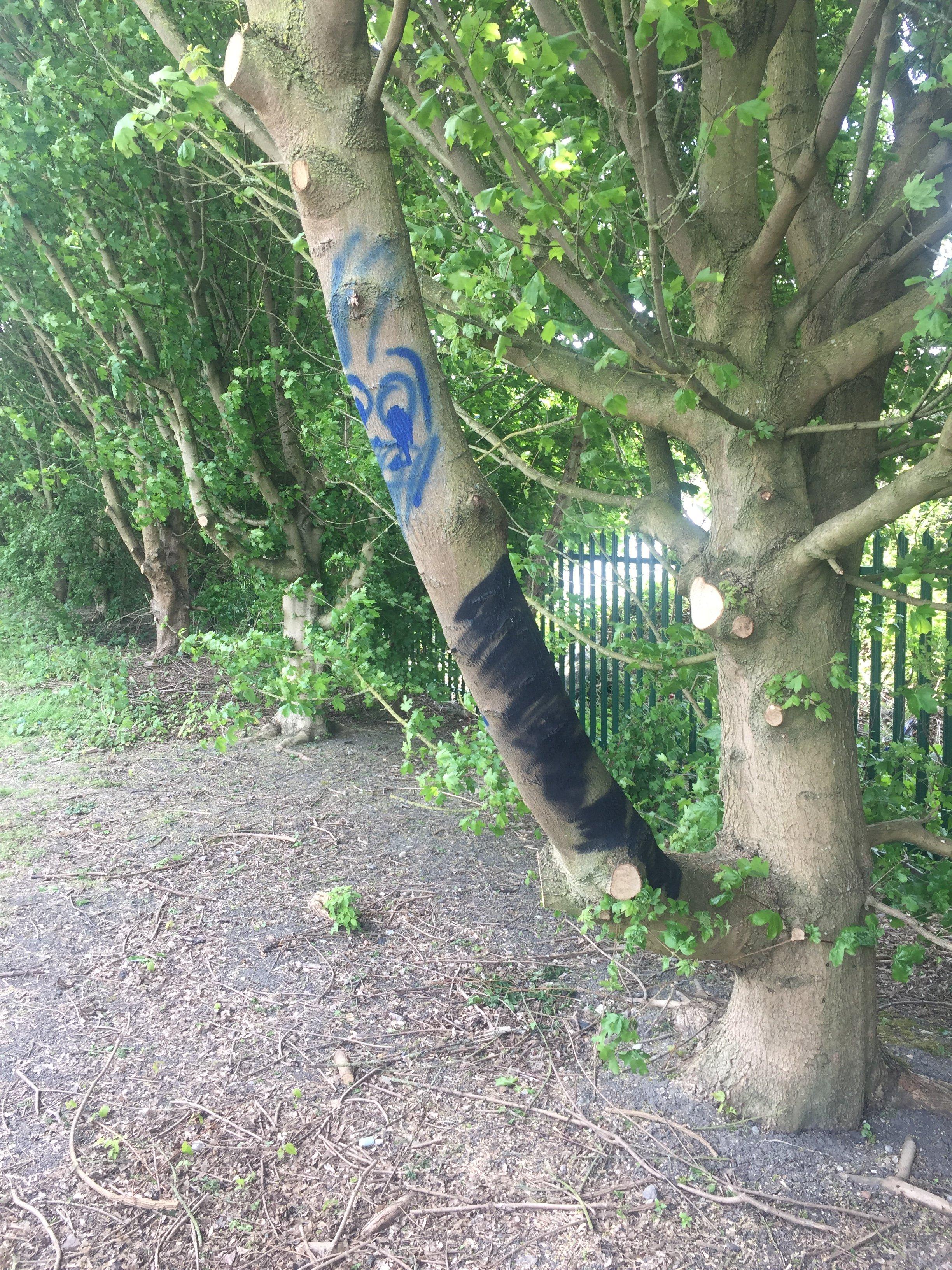 graffiti removal on a tree