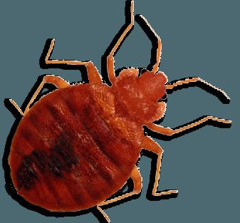 bedbug treatment