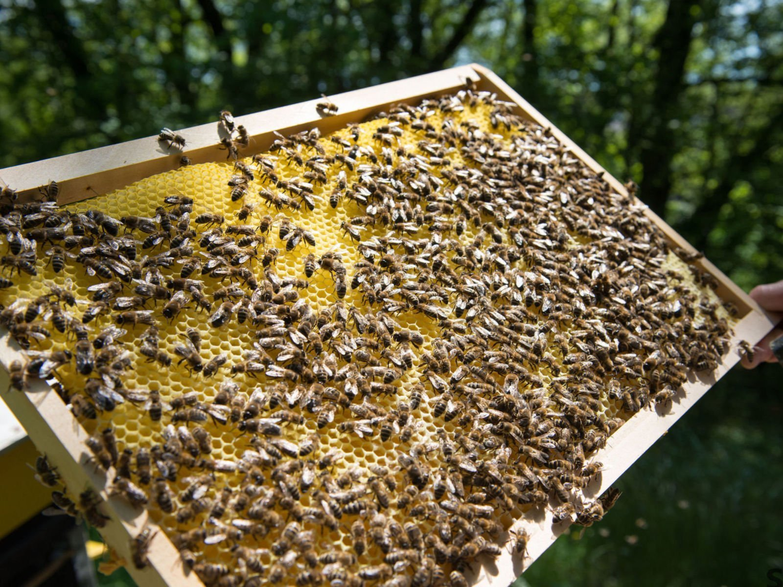 honey bees on a hive panel