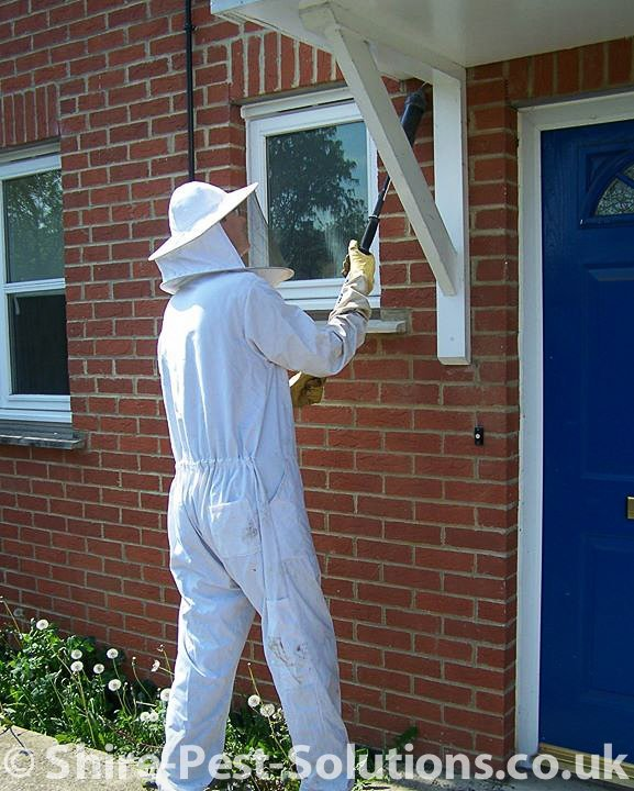 wasp nest treatment in abingdon