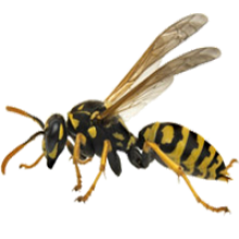 wasp nest treatment and removal