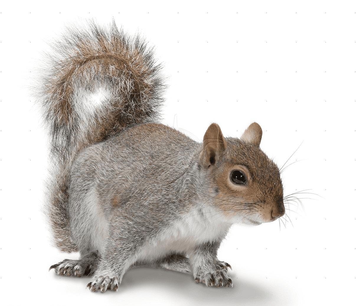 squirrel problem