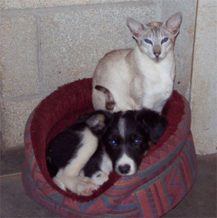 dog and cat sharing the pet bed