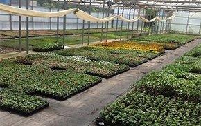 produzione di piante
