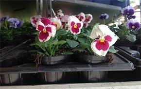 fiori e piante da interno