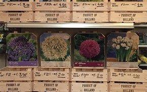 semi per fiori