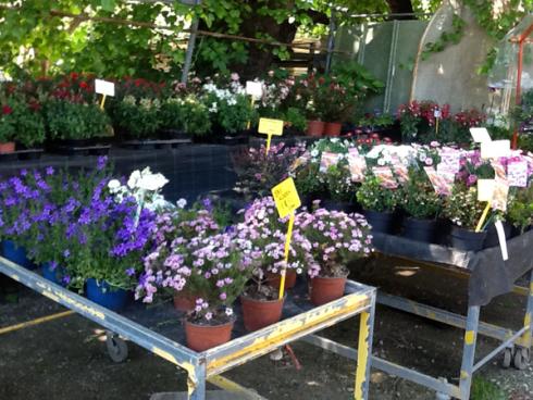 Varietà di piante