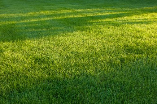 customize your lawn treatment with a soil report - Lawn Treatment
