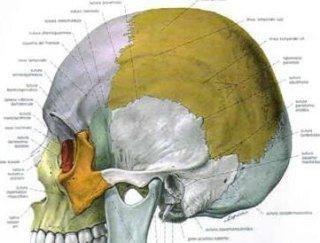 tecnica cranio sacrale ancona