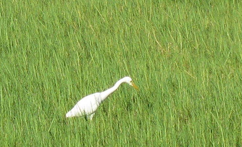 Egret - Intermediate