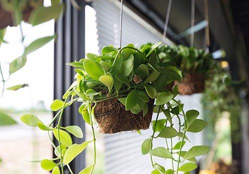 dei vasi appesi delle piante