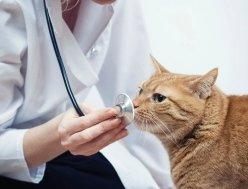 Ambulatorio Veterinario Palladio, gatto