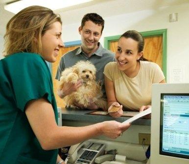 Ambulatorio Veterinario Palladio, Verona, veterinari a domicilio, veterinario cani, veterinario gatti, analisi sangue animali, antizecche per cani