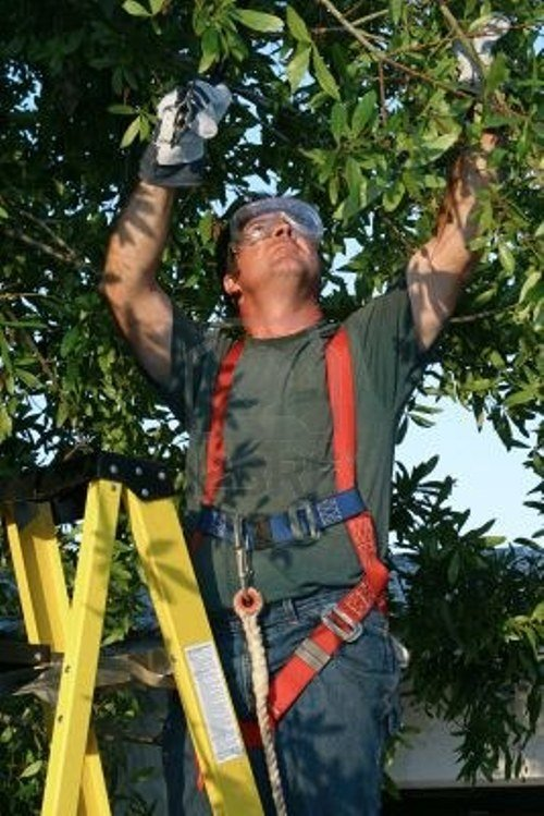 Man providing a range of tree services in Sacramento, CA