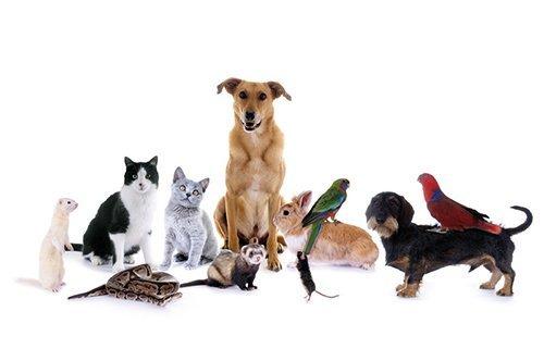 una simpatica rappresentazione di vari tipi di animale
