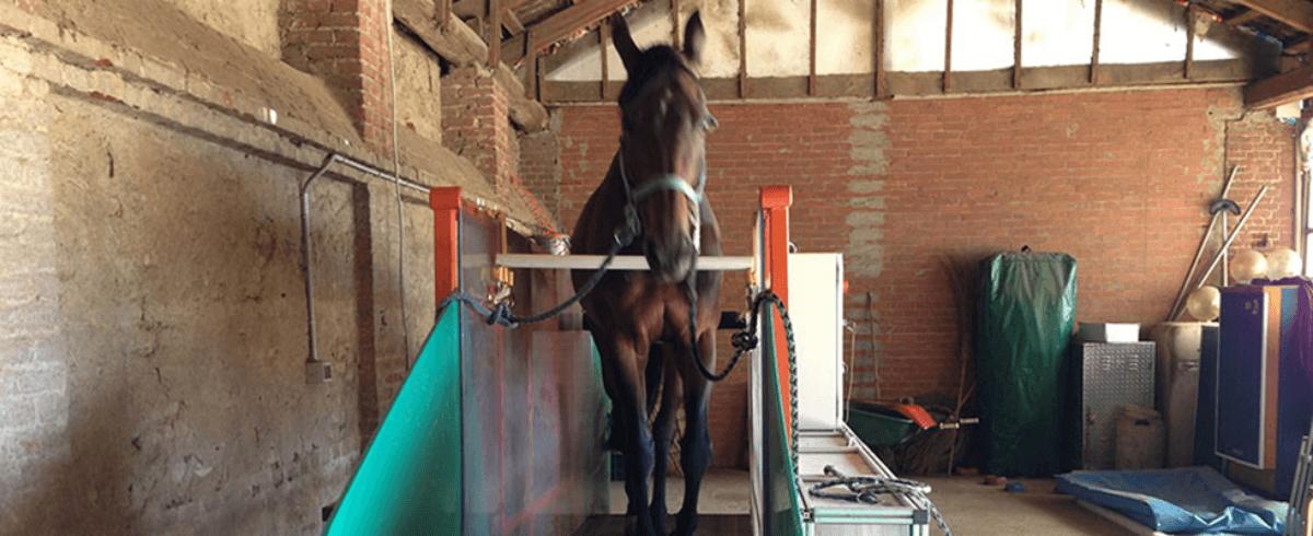 cavallo nella scuderia