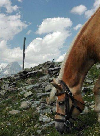 un cavallo che mangia l'erba