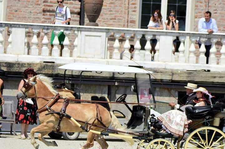 una carrozza trainata da cavalli